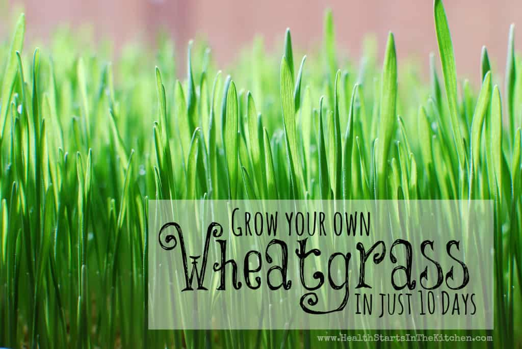 Wheatgrass Pictures 80