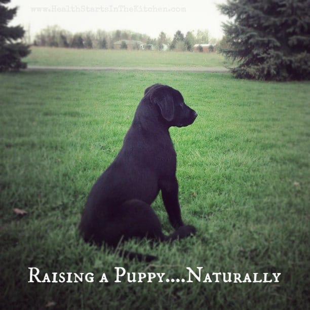 RaisingAPuppynaturally