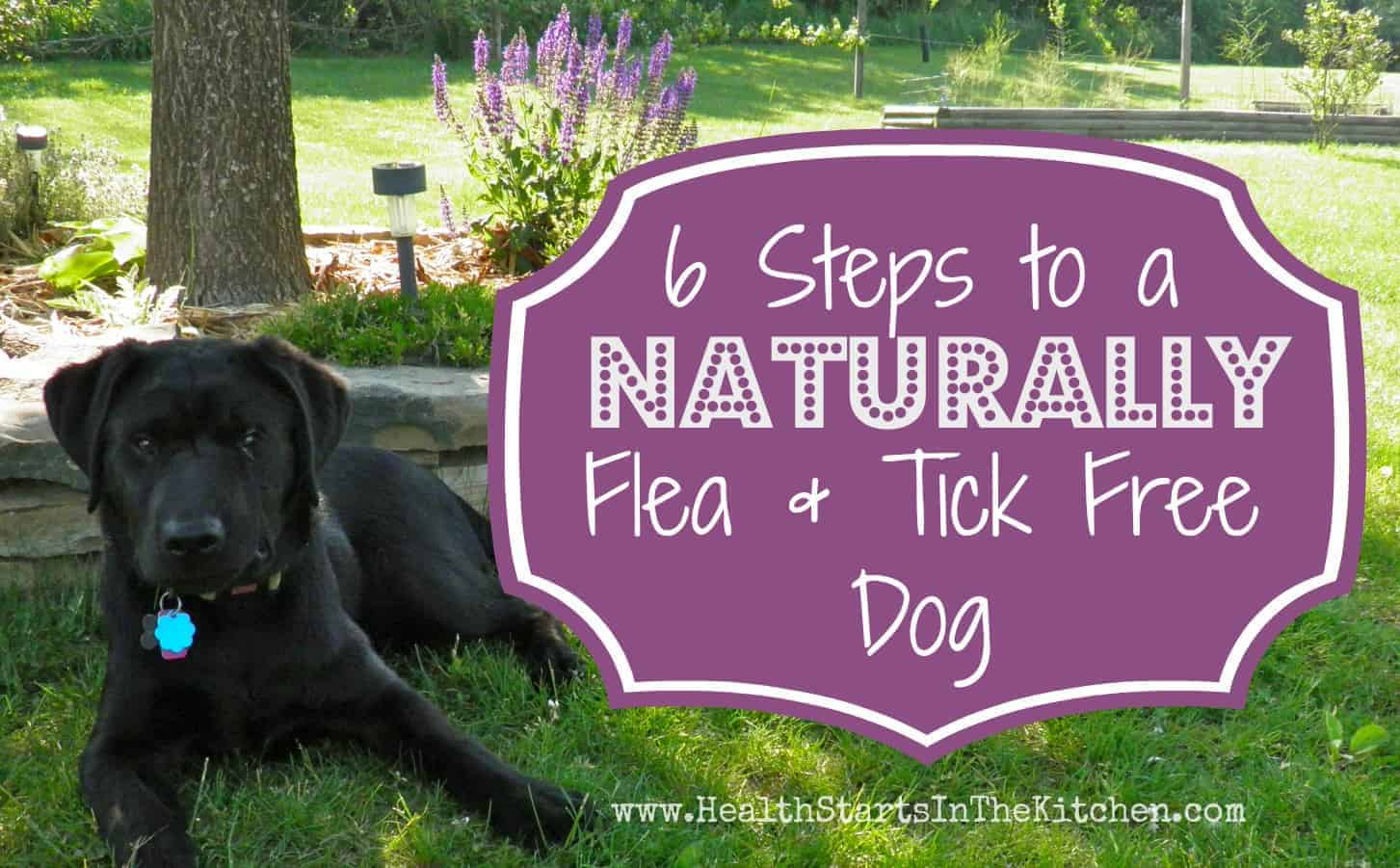 6 Steps to a Naturally Flea & Tick Free Dog