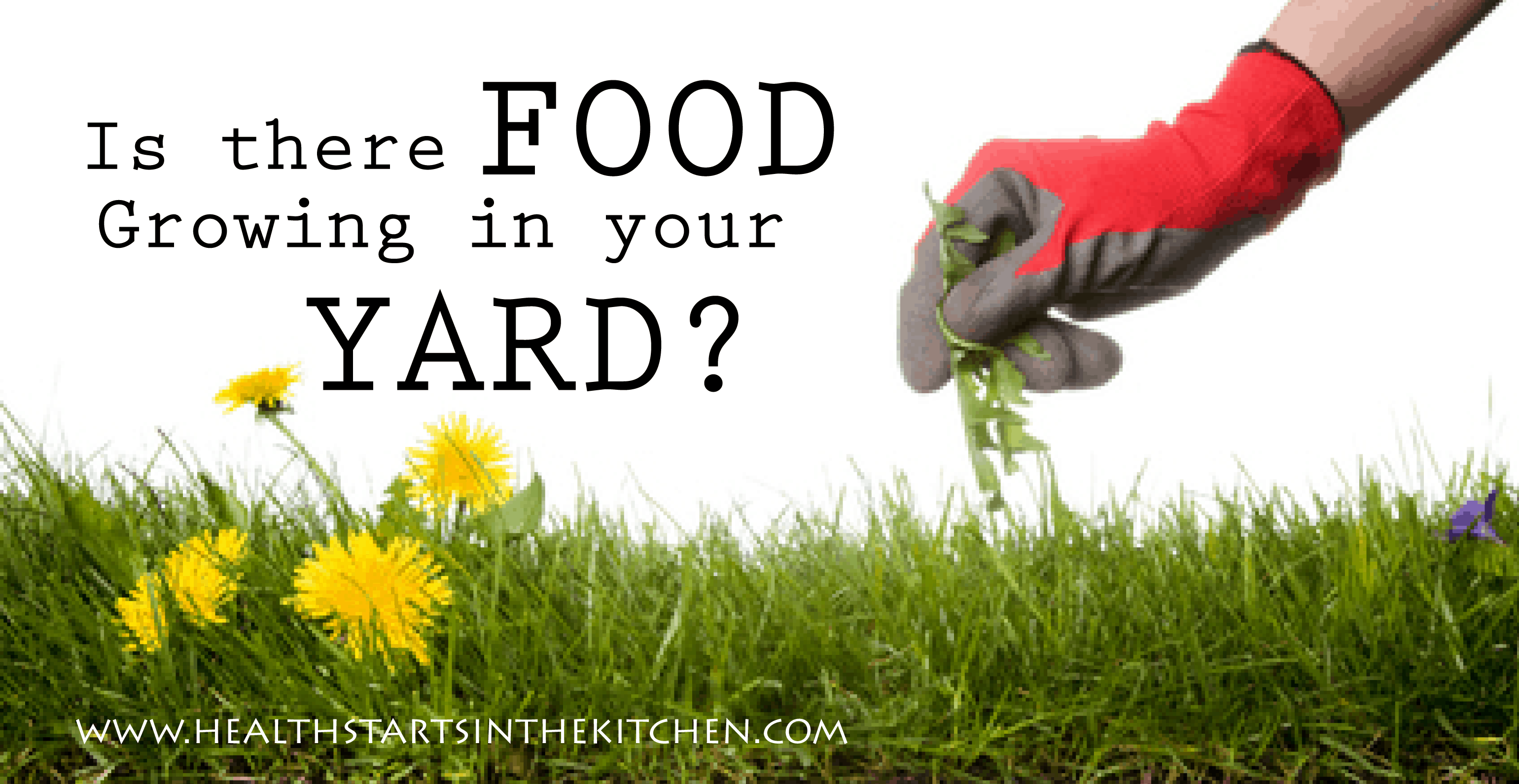 Nice Edible Plants In Your Backyard Part - 4: Is There Food Growing In Your Yard?