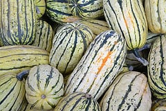 Winter Squash Puree - Delicata