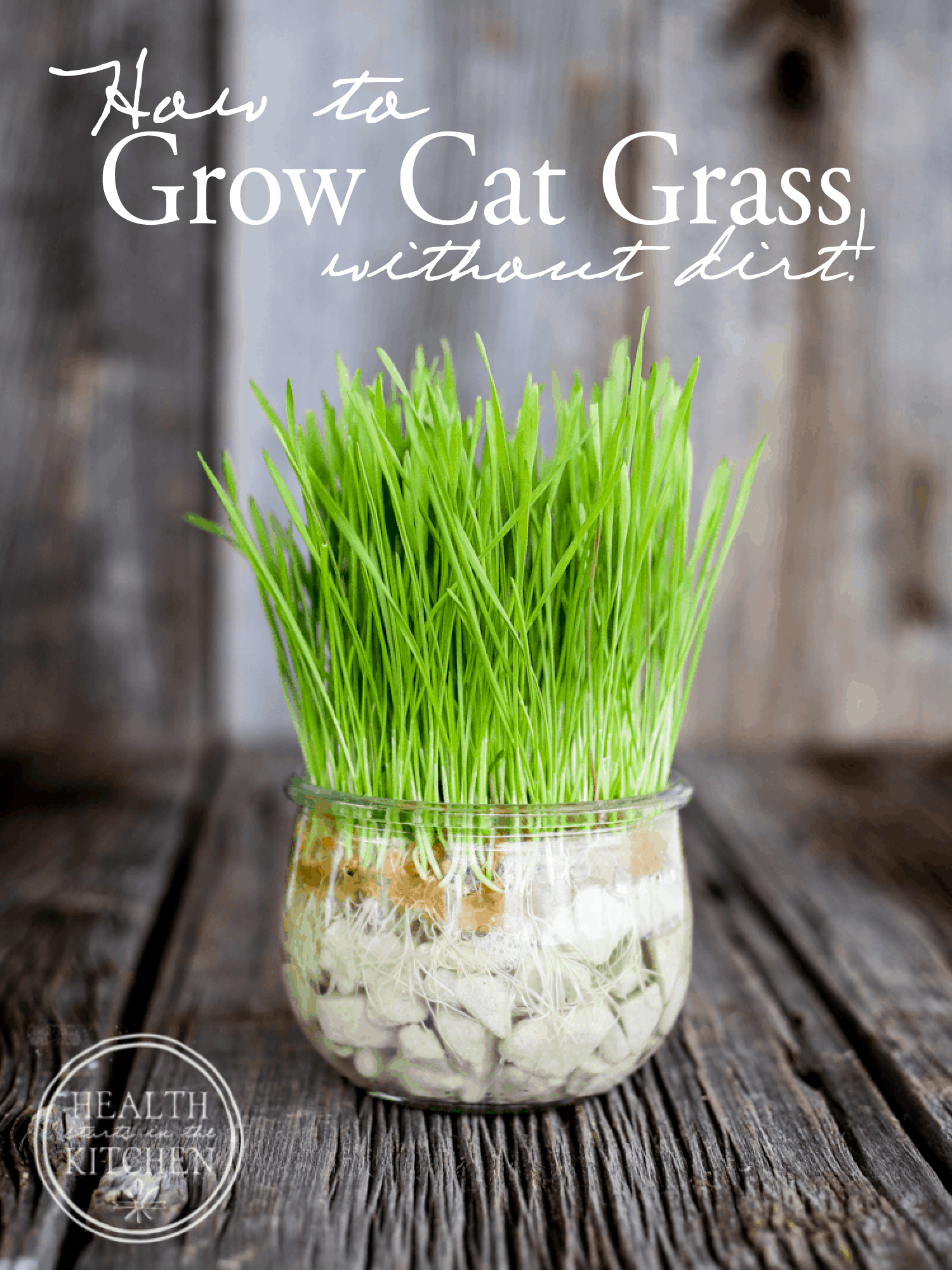 How to Grow Cat Grass {without dirt}