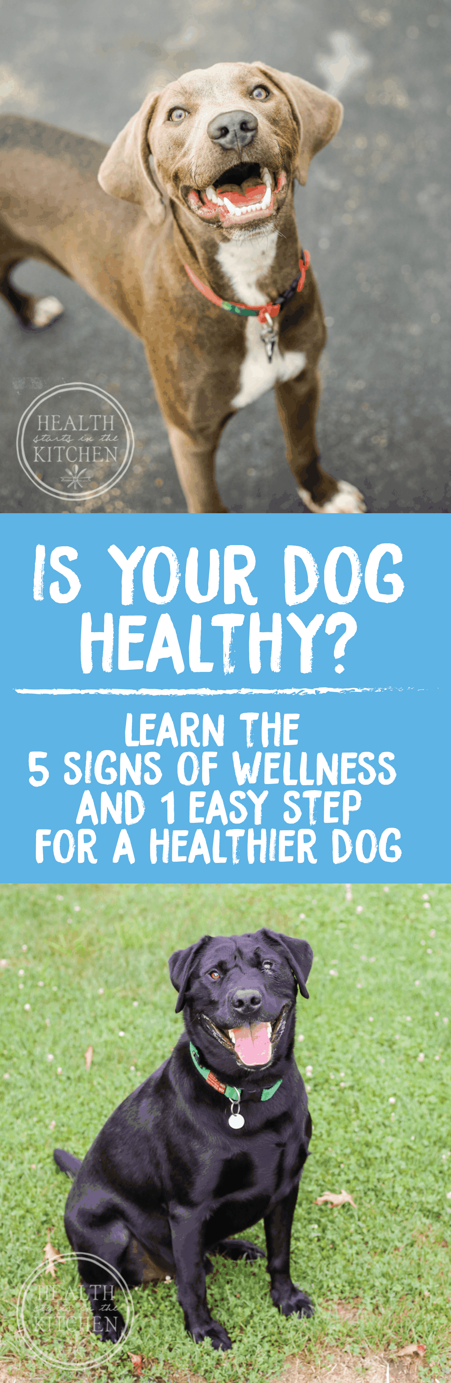Is your Dog Thriving or Just Surviving? Learn the 5 Signs of Dog Wellness & How to Achieve them!
