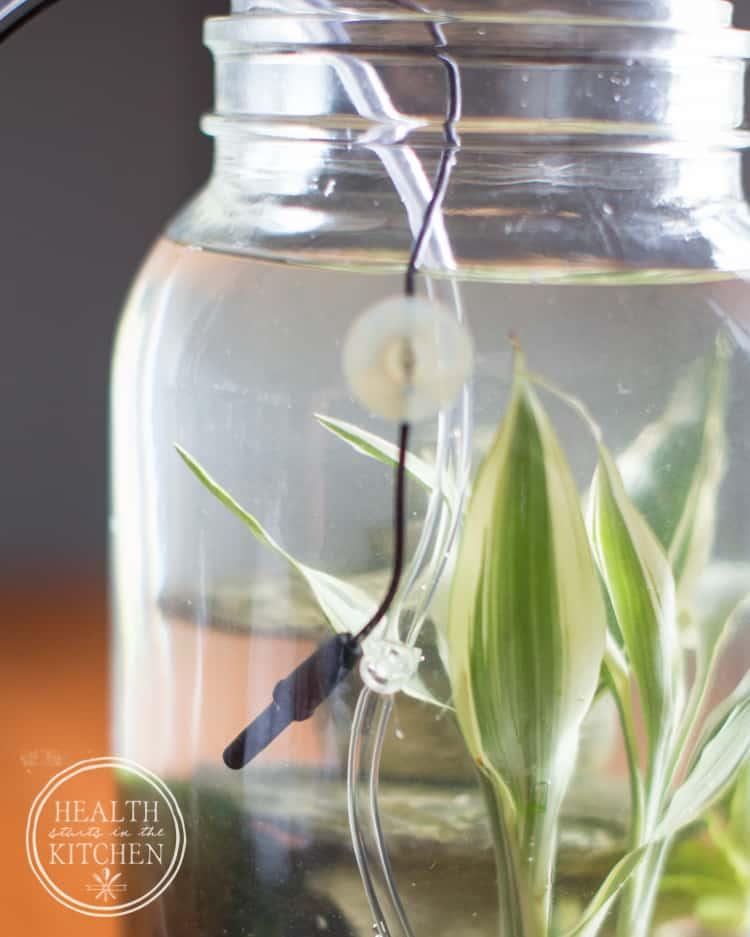 How to Make a Mason Canning Jar Aquaponics Aquarium