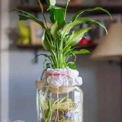 DIY: Self-Cleaning Canning Jar Aquarium