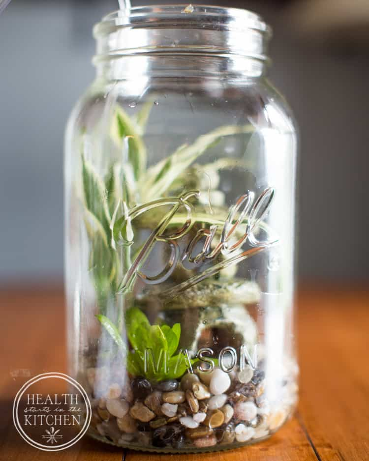 Diy Self Cleaning Canning Jar Aquarium Health Starts In