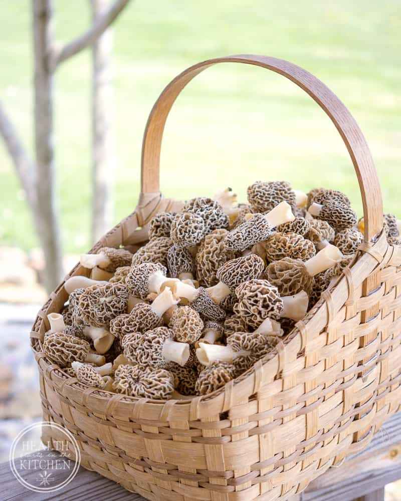 Wild Foraged Morel Mushrooms