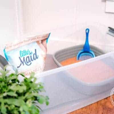 How to Upgrade to a Healthier Litter Box