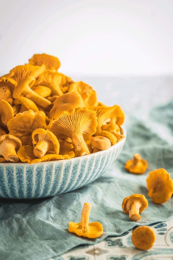 Fresh clean chanterelle mushrooms overflowing from a blue bowl